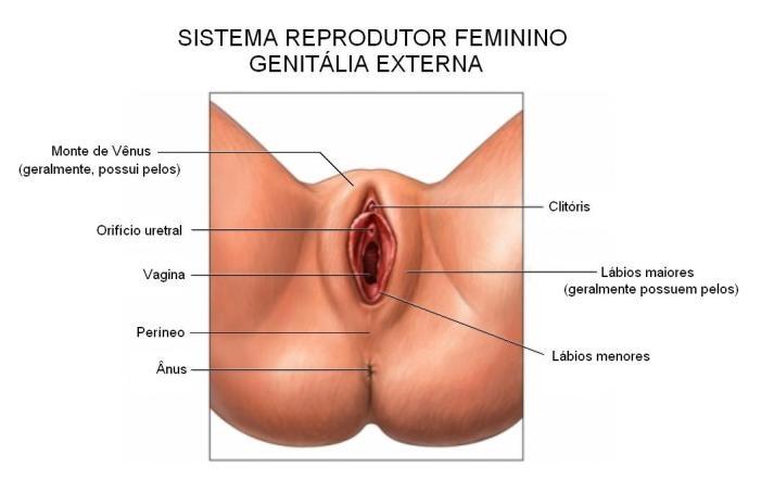 levas mujer vaginal en Alcobendas